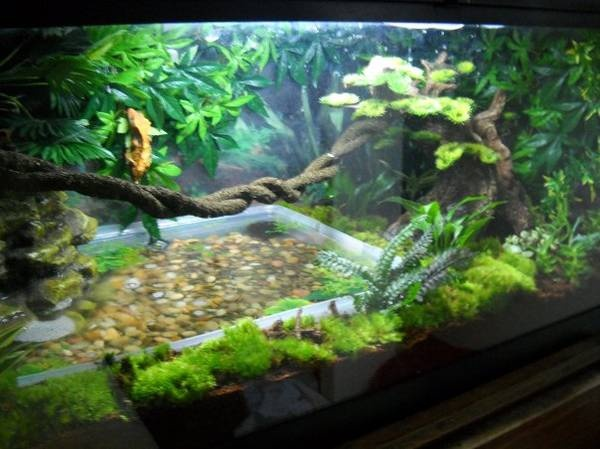 crested gecko and his awesome set up vivarium forums crested gecko terrarium ideas. Black Bedroom Furniture Sets. Home Design Ideas