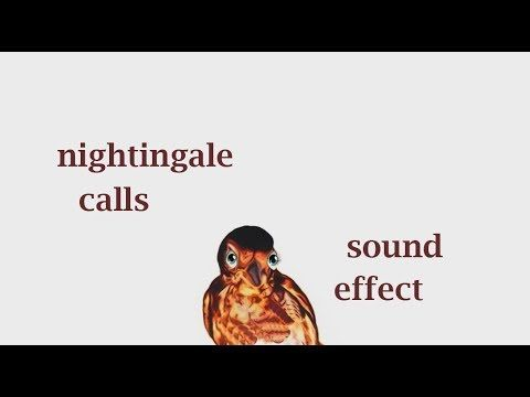The Animal Sounds: Nightingale Calls - Sound Effect - Animation