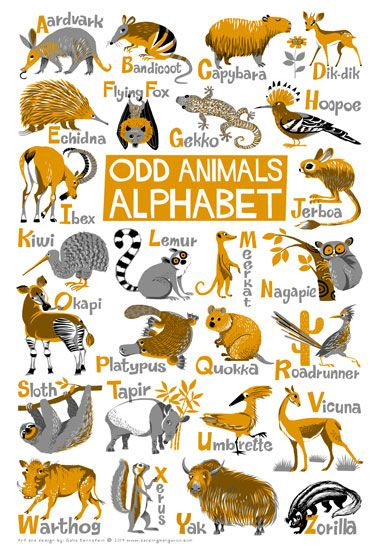 Odd Animals Illustrated Alphabet by Galia Bernstein