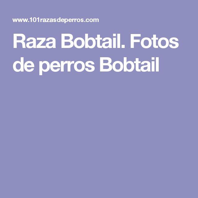 Raza Bobtail. Fotos de perros Bobtail