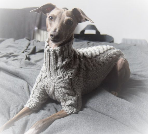1000 Ideas About Italian Greyhound Clothes On Pinterest