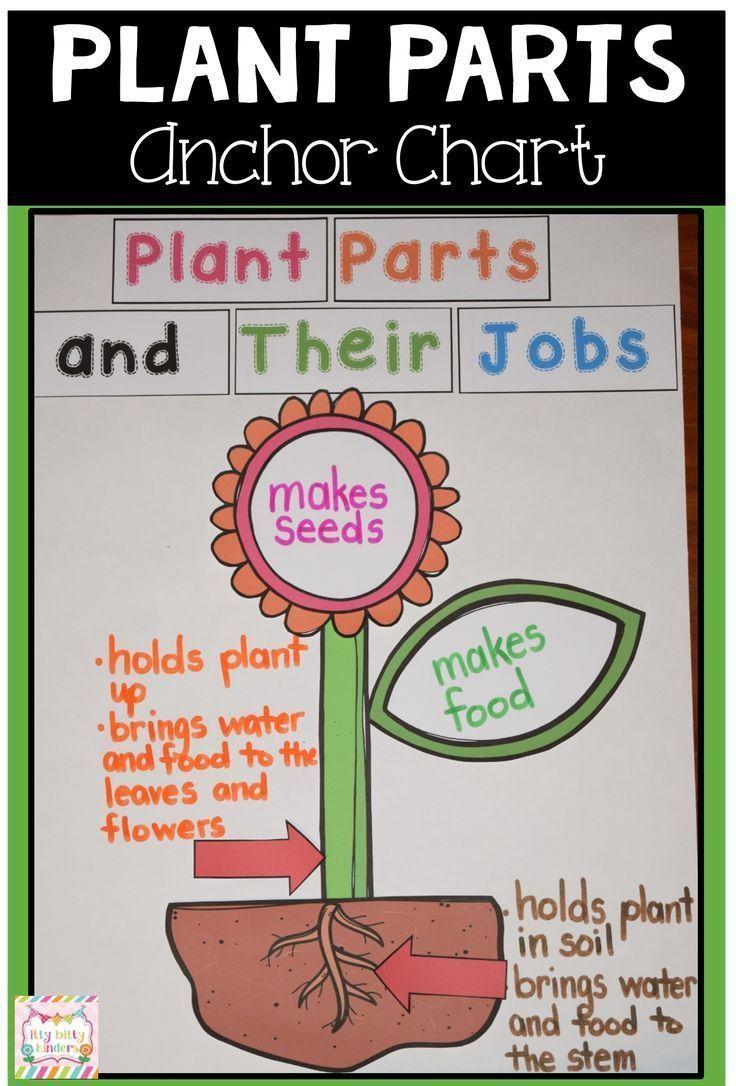 Plant Unit Plant Neu Plant New Parts Of A Plant Anchor Charts Plants Unit [ 1086 x 736 Pixel ]
