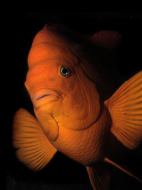 17 Best Images About Tropical Fish On Pinterest Fish