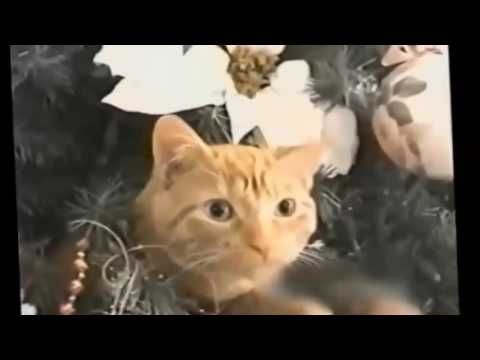 Funny Cats Fail Compilation 1