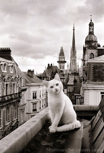 Parisian cat ~~ Don't fall kitty!
