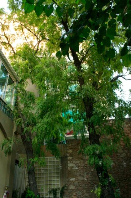 Aleria garden