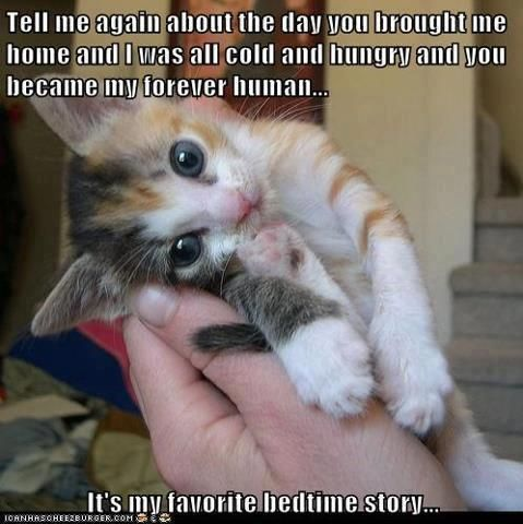 the human animal relationship forever and a day