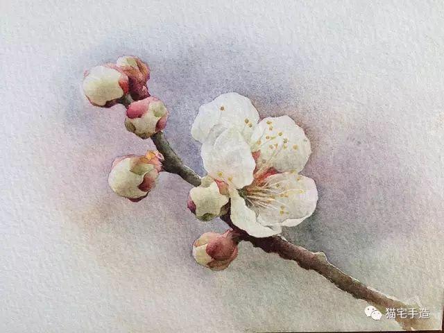 立春 | 花花小水彩来一组