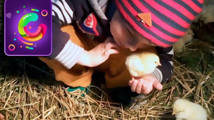 Выводим цыплят в инкубаторе, играя. Подготавливаем куриные яйца. Развива...