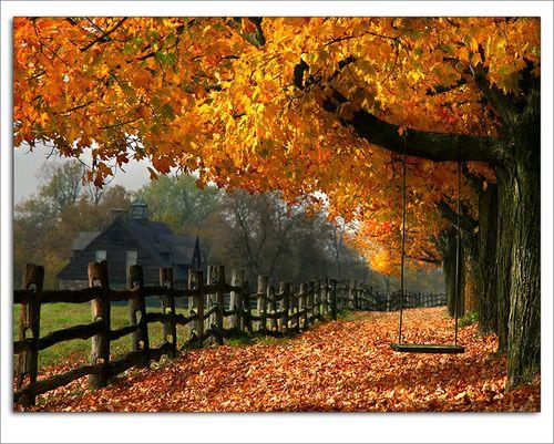 Love fall    dougstumblr-deactivated20100702)Fence, Fall Leaves, Nature, Autumn Leaves, Seasons, Autumn Fall, Beautiful, Places, Trees Swings