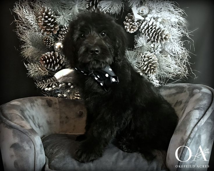 Devon Has An Exceptional Temperament Perfect For Therapy Work Or