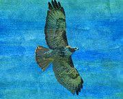 """New artwork for sale! - """" Red Tailed Hawk Bird Raptor  by PixBreak Art """" - http://ift.tt/2liDoya"""