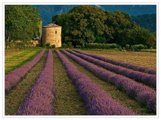 Morning sunlight, Drome Valley, France    - Brian Clark