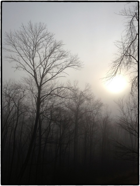 Early Morning Sun burning off the fog in Chatham, NJ Photo Credit: Rosemary Beck