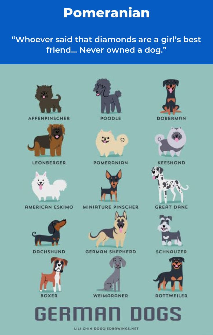Pomeranian Bold And Inquisitive Dog Drawing German Dogs Dog Print Art