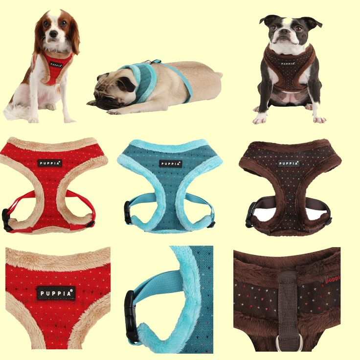 "Yuppie (winter) harness from Puppia! Every dog deserves to be a ""Yuppie"" Puppy.  This harness comes in 3 colours (aqua, red or brown) in sizes small, medium and large.  Retails for $24.00 but is currenly on sale for only $20.00.  Sizes and colours are limited, so shop early."