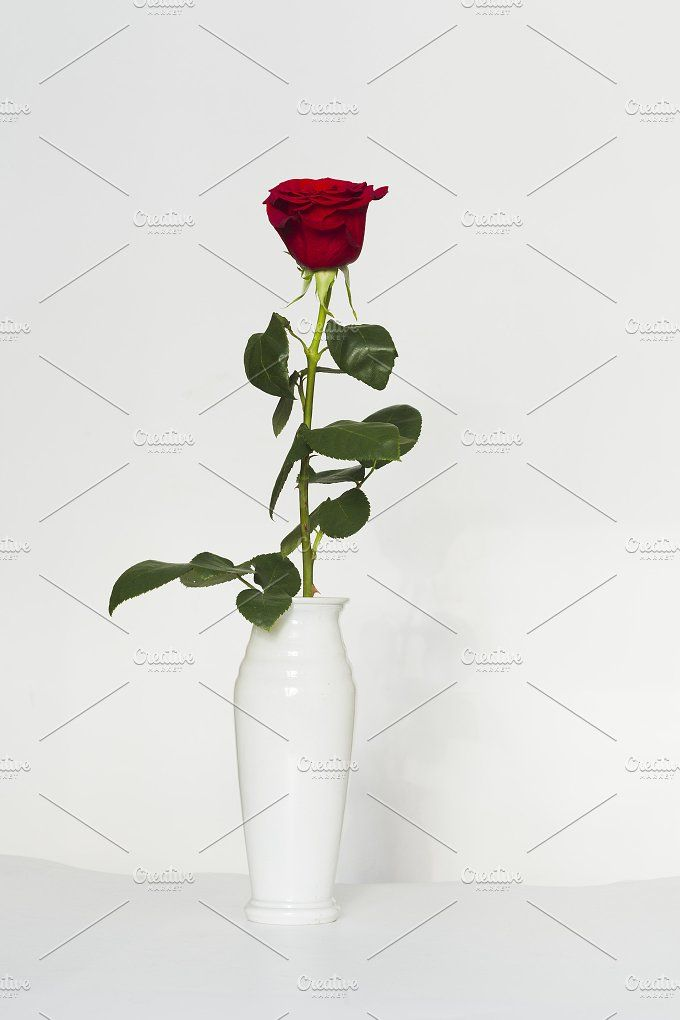 Red rose on a white background by oleghz on @creativemarket