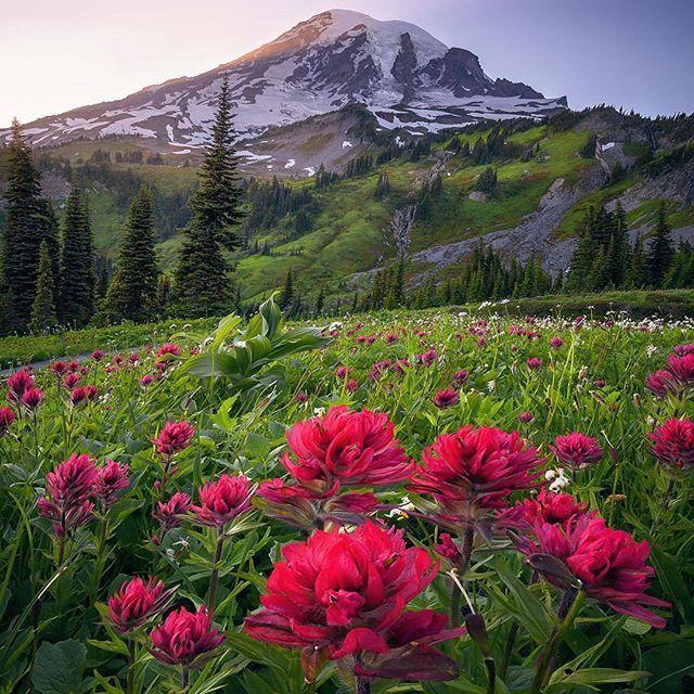 🌎Национальный парк Маунт-Рейнир   Вашингтон   США.🇺🇸  📝Национальный парк Маунт-Рейнир (Mount Rainier National Park) — национальный парк США, расположенный в юго-восточной части округа Пирс и северо-западной части округа Льюис в штате Вашингтон. Парк был основан 2 марта 1899 года, пятым по счету в Соединенных Штатах. Площадь парка составляет 953,5 кв.км.  На территории парка находится гора🗻 Рейнир — самая высокая вершина Каскадных гор, ее высота — 4392 метра. Она является визитной…