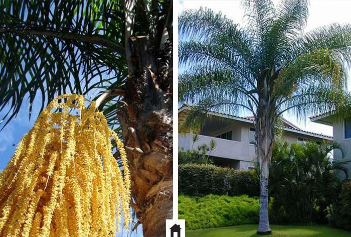 25 plantas resistentes ao sol   – Plantas resistentes ao sol