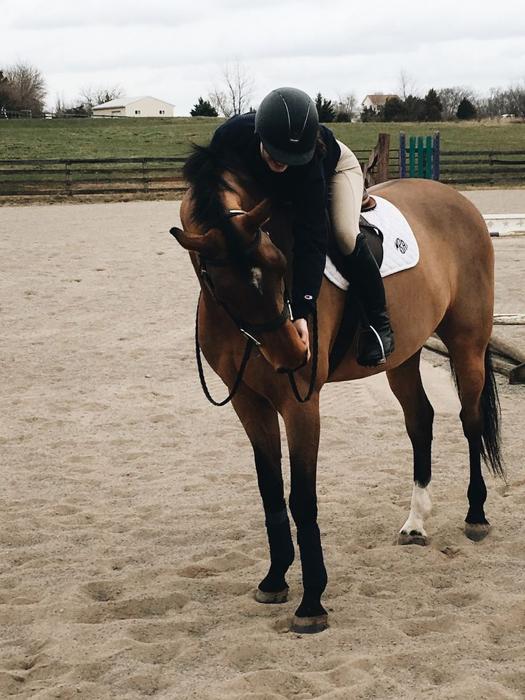 "This is champagne, a 6yo warmblood gelding . I use him for showjumping and dressage. he's such flashy"" gelding but hes super sassy on dressage he attends to any command and its great for kids but his trot with them is a bit bumpy ."