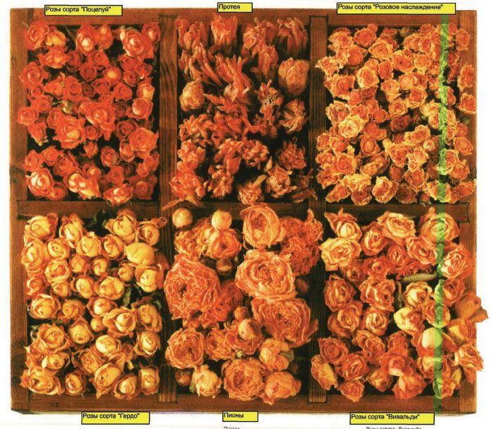 Как лучше сушить цветы для флористических поделок. Как выбирать и покупать засушенные цветы.