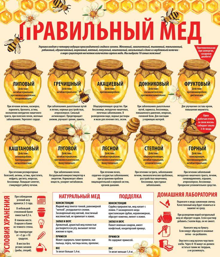 Инфографика. Правильный мед. Виды меда. Условия хранения меда. Лечение медом