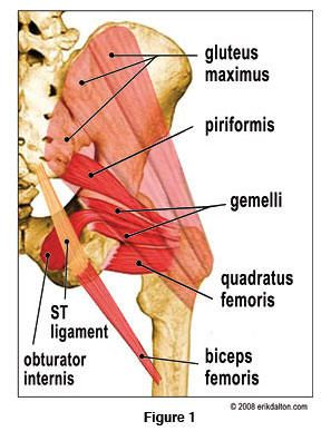 brain info for hip mobility...piriformis pain often mis diagnosed as saitica pain. Home relief - stand with your back against a wall with a tennis ball inbetween you...massage the spot as needed. Follow by a few stretches to open up the hip flexors.