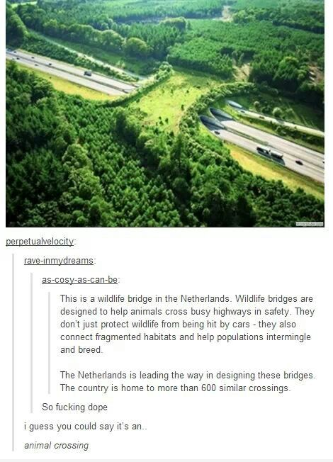 I live in the Netherlands and i've never seen a bridge like this...