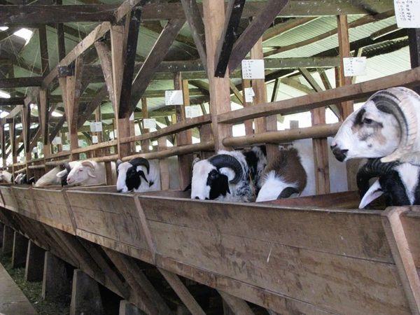 Keren, Kampung Ini Menyuguhkan Wisata Alam dan Ternak Domba Terpadu Lho! http://jitunews.com/read/23297/keren-kampung-ini-menyuguhkan-wisata-alam-dan-ternak-domba-terpadu-lho #Jitunews