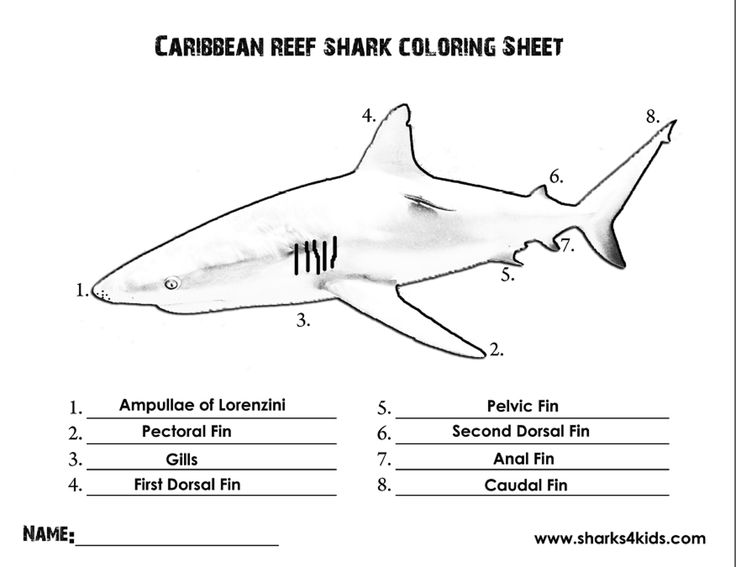 Shark Parts Blank Diagram - Introduction To Electrical Wiring Diagrams •