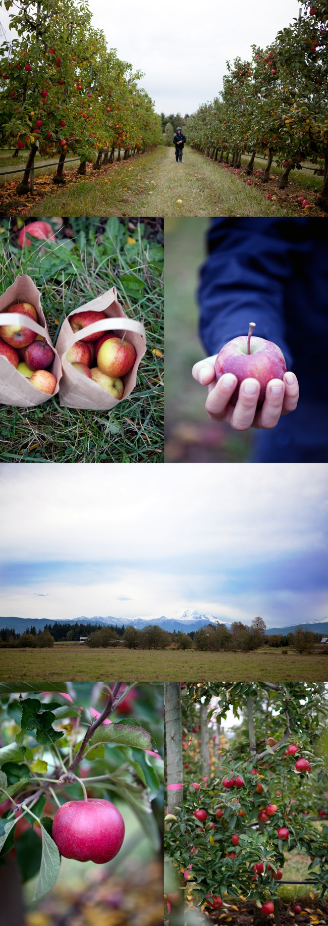 71 Best Apple Orchard Sessions Images On Pinterest