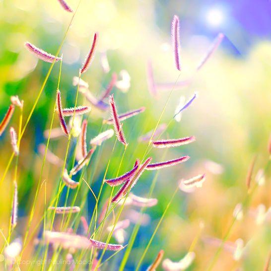 summer.... by impatienss.deviantart.com