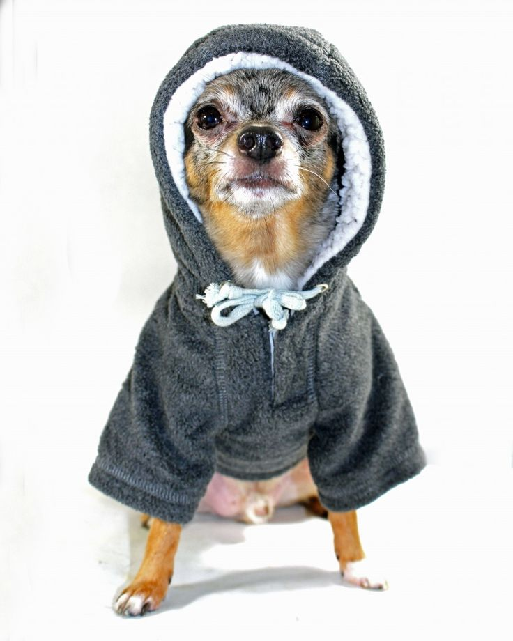 Best Friends World - Hip Doggie Crest Fleece Grey Hoodie, €25.00 (http://www.bestfriendsworld.ie/hip-doggie-crest-fleece-grey-hoodie/)