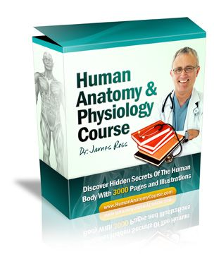 I'm about to share with you everything you'll ever need to know about human anatomy, physiology and drug therapy, complete with diagrams, courses, lesson plans, quizzes and solutions. I'll provide an effective and painless way to learn or review anatomy and physiology, from the chemical level through the entire organism  -human anatomy and physiology study guide  -anatomy and physiology study guides