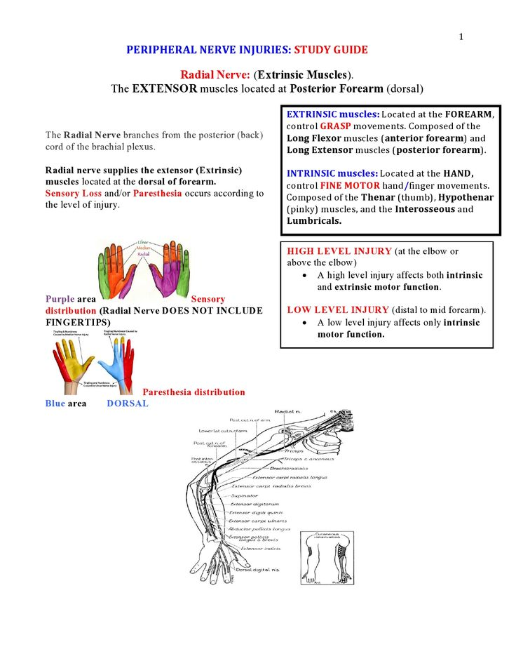 Peripheral Nerve Injuries Study Guide  page 1  https://www.inkling.com/read/skirven-rehabilitation-the-hand-upper-extremity-6th/chapter-45/presentation-of-specific-nerve