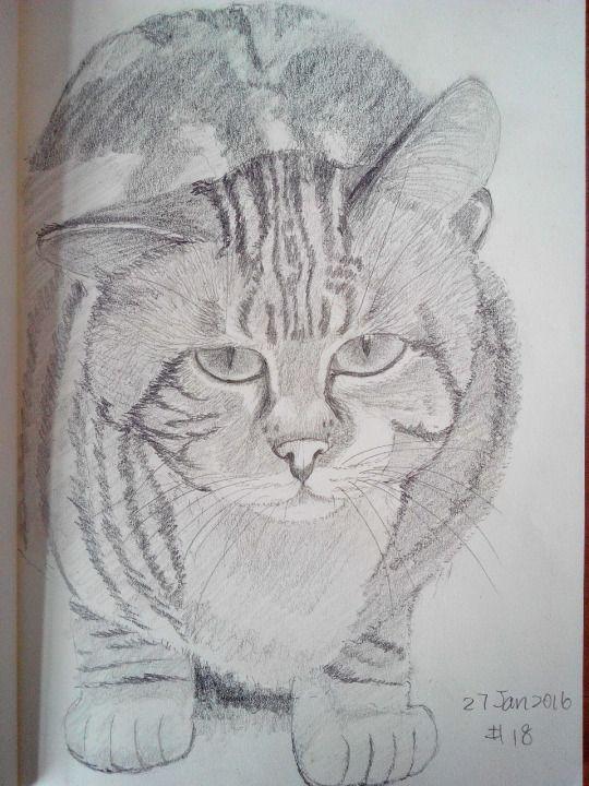 Cat sketching practice #018