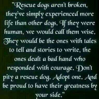Don't pity a rescue dog.  Adopt one.  And be proud to have their greatness by your side...