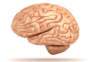 Human Brain: Facts, Anatomy & Mapping Project