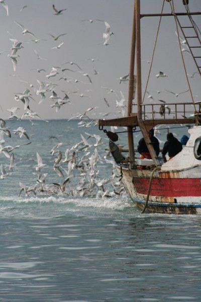 Il costante ritorno alle origini: il mare