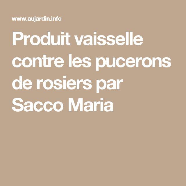 Produit vaisselle contre les pucerons de rosiers par Sacco Maria