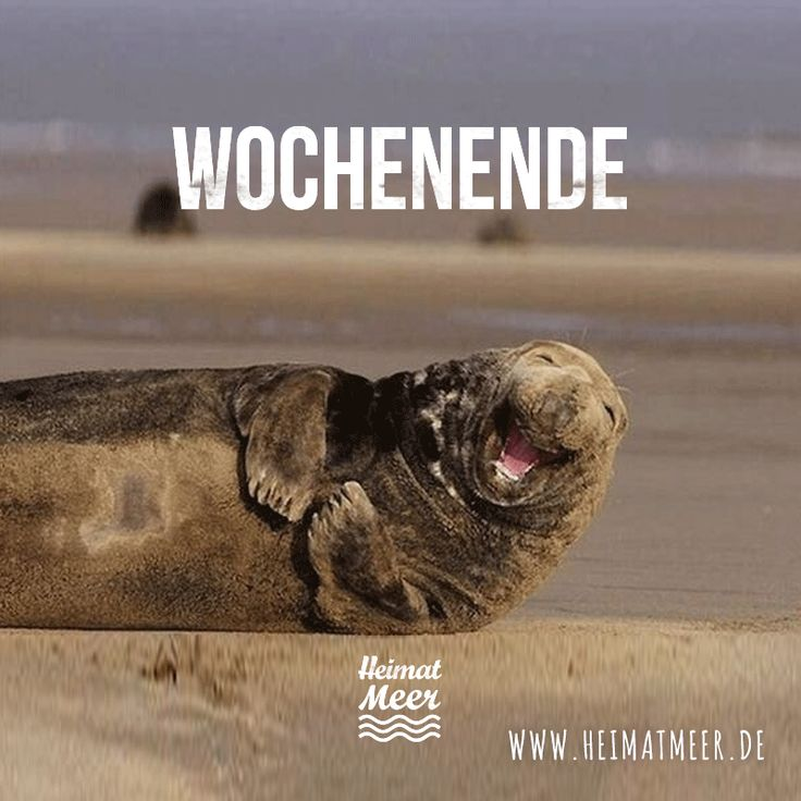 Wochenende! Ab ans Meer! >>
