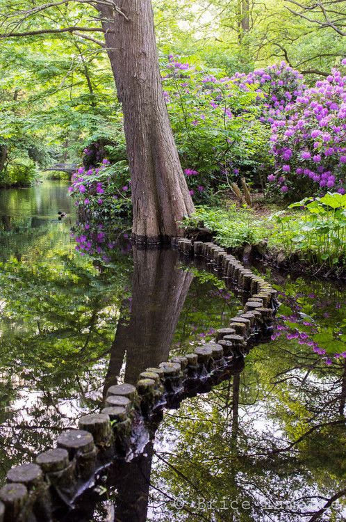 photo: The Path, Tiergarten – Berlin, Germany ... gorgeous stream ... reflection ...