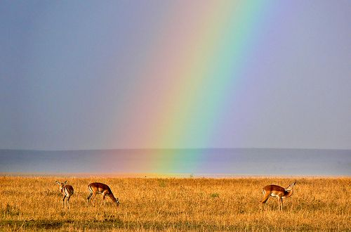 amazing photograph from Kenya