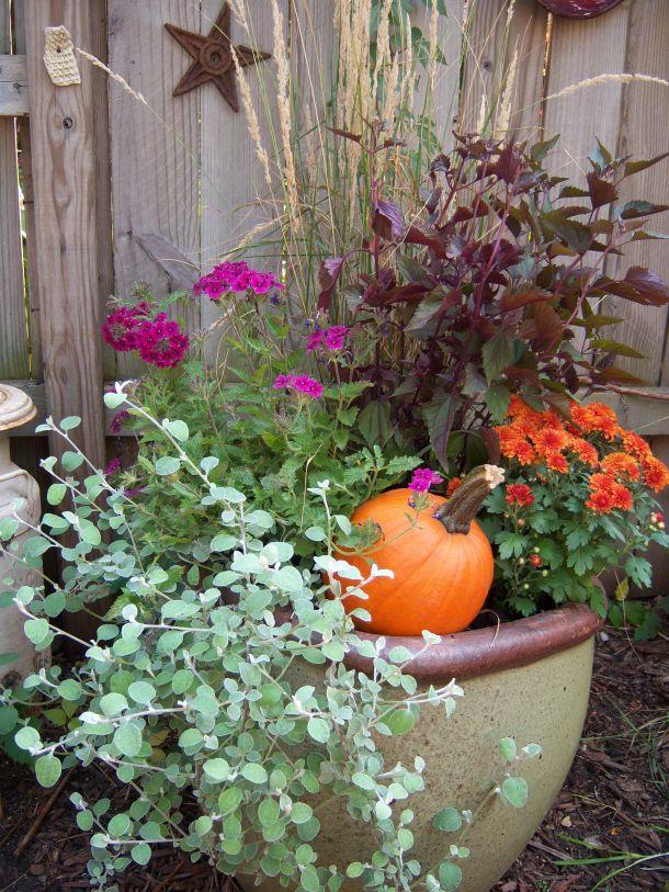 licorice plant + ดาดตะกั่ว + purple verbena