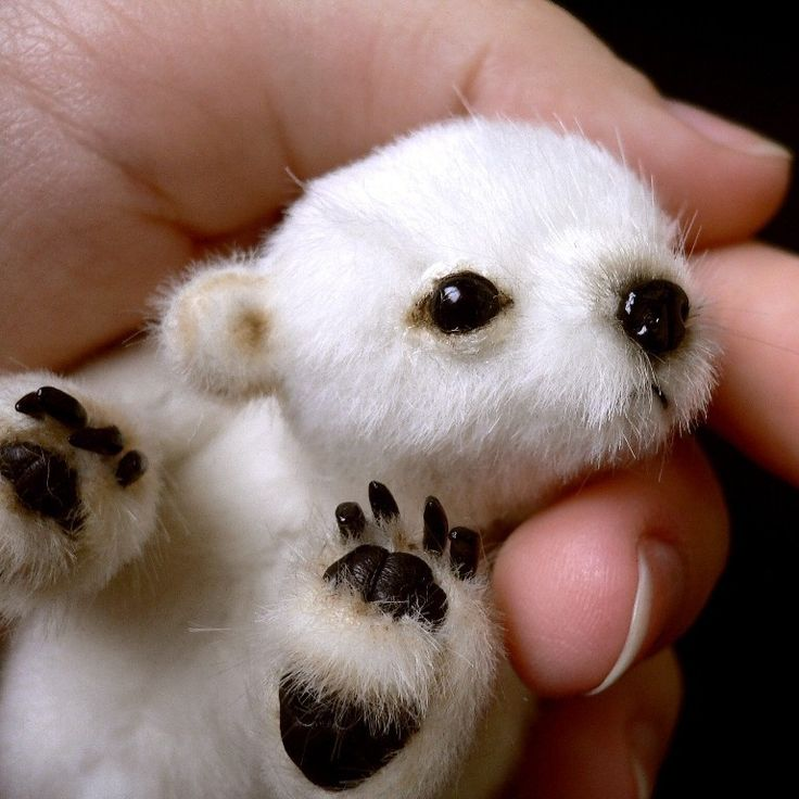 Pattern and instructions for how to make this adorable miniature polar bear! So detailed!