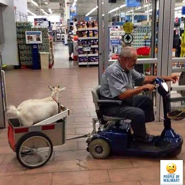 Just Because You Put Your Goat In A Hilarious Chariot That