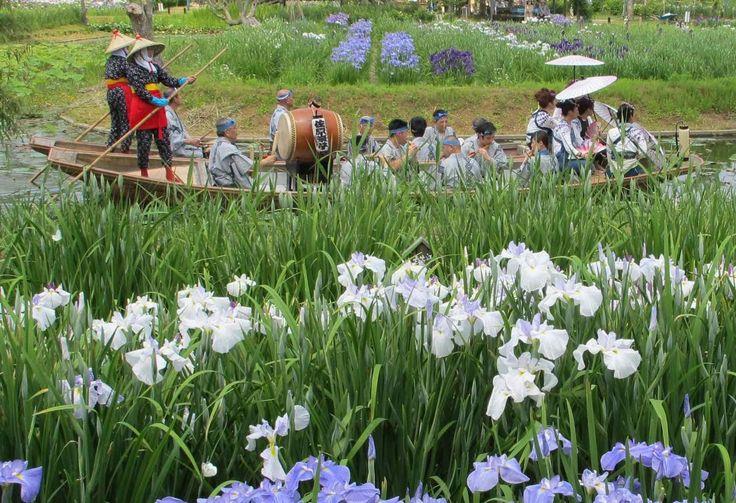 [HD]水郷佐原水生植物園あやめ祭り iris festival 花の名所案内