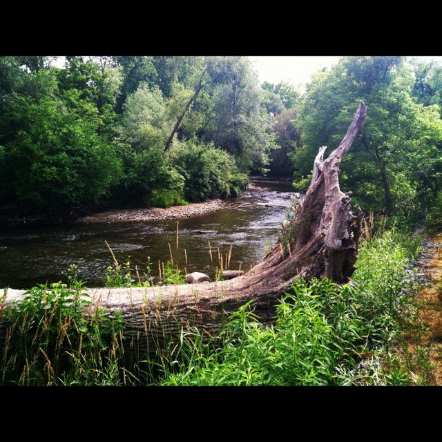 78 best images about Places to Visit Near Troy, MI on ...