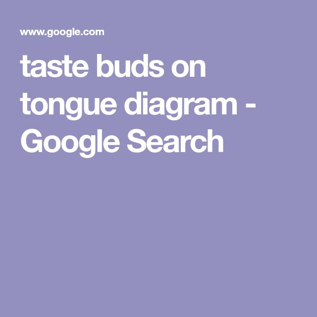 taste buds on tongue diagram - Google Search