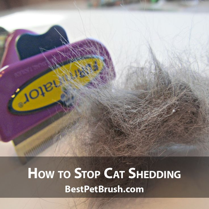 How to Stop Cat Shedding. Find The Best Solution For Your Cat Shedding. This Brush Is The Best On The Market.